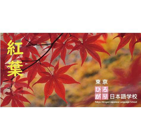 紅葉 Autumn leaves