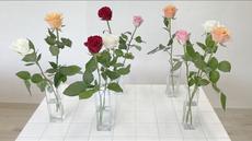 切り花を元気にする水あげ方法