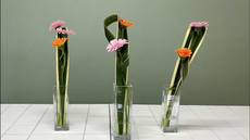 ガーベラと葉っぱの花あそび